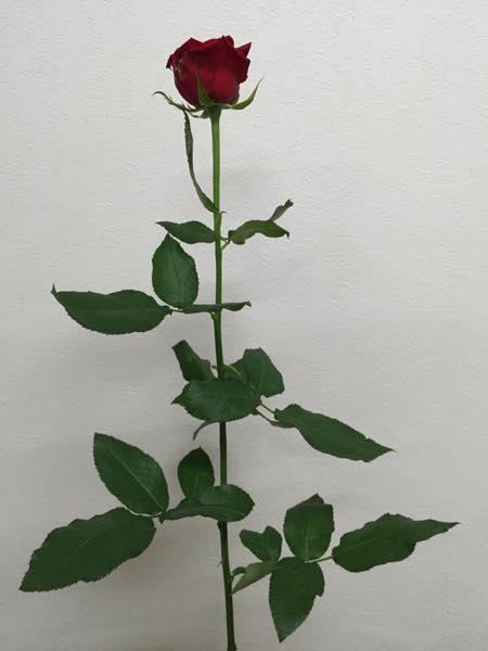 サムライ08 薔薇
