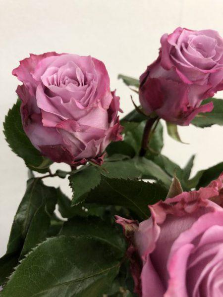 紫のバラ マリティム