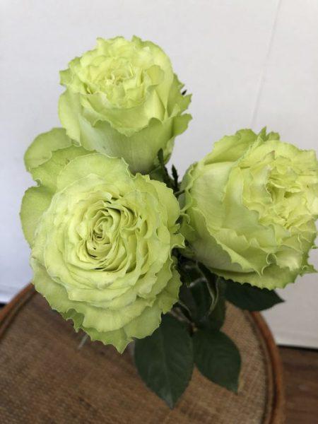 緑色のバラ レモネード