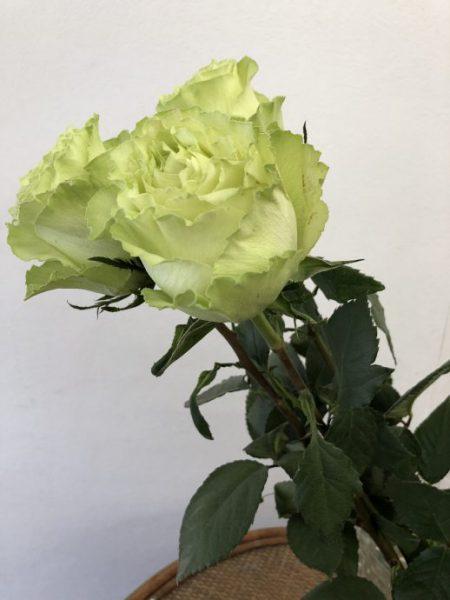 グリーンのバラ レモネード