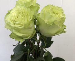 レモネード バラ