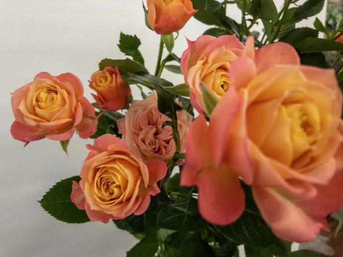 フェリーク スプレーバラ(薔薇)