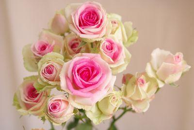ミミエデン スプレーバラ(薔薇)