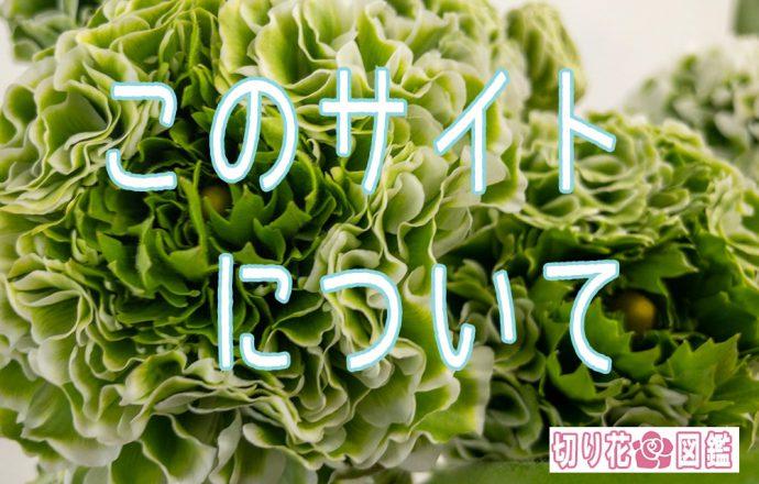 【 切り花 】花屋にある花の名前が分かる【 切り花✿図鑑 】