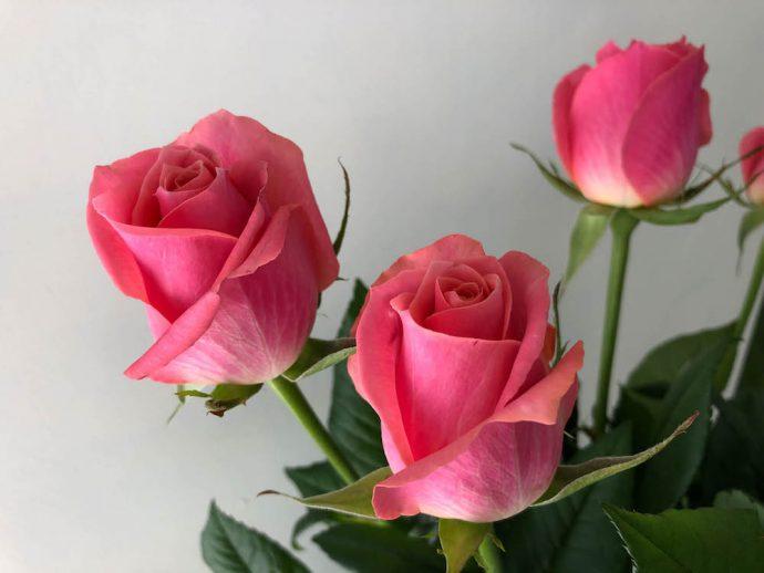 エースピンク バラ