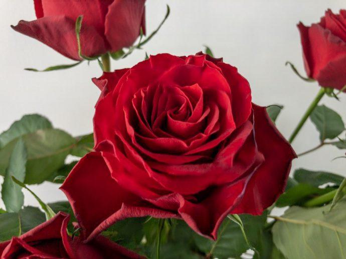 クリストローゼ バラ(薔薇)