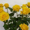 ルミナス! スプレーバラ(薔薇)