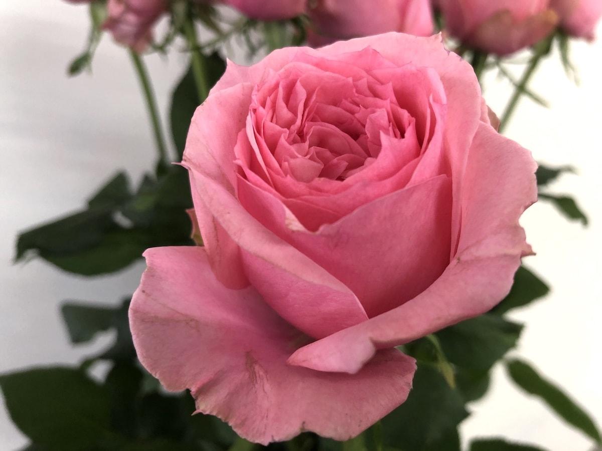 ジュエリーボックス バラ 薔薇