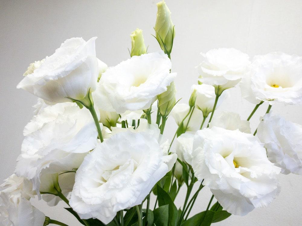 コロンホワイト トルコキキョウ