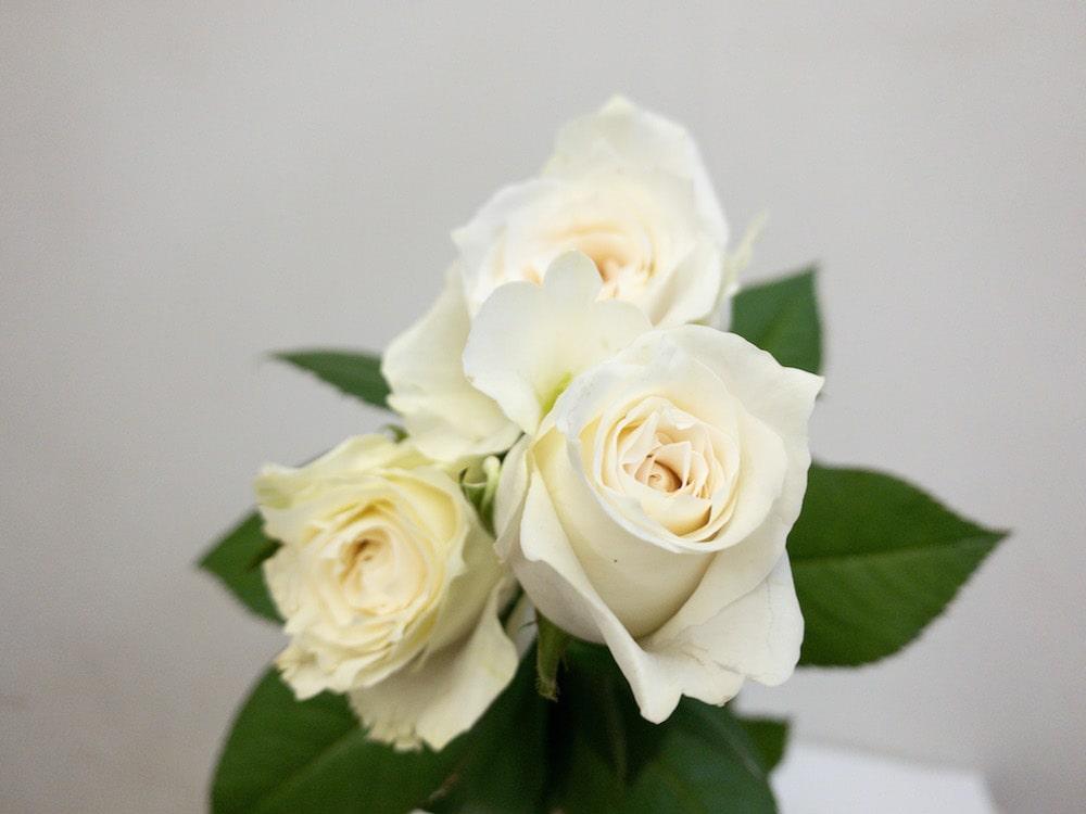 薔薇 グランオマージュ