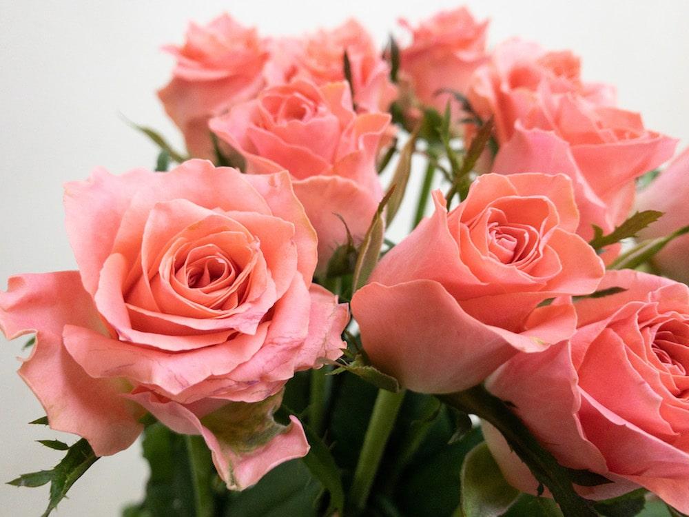 エースピンク+ バラ